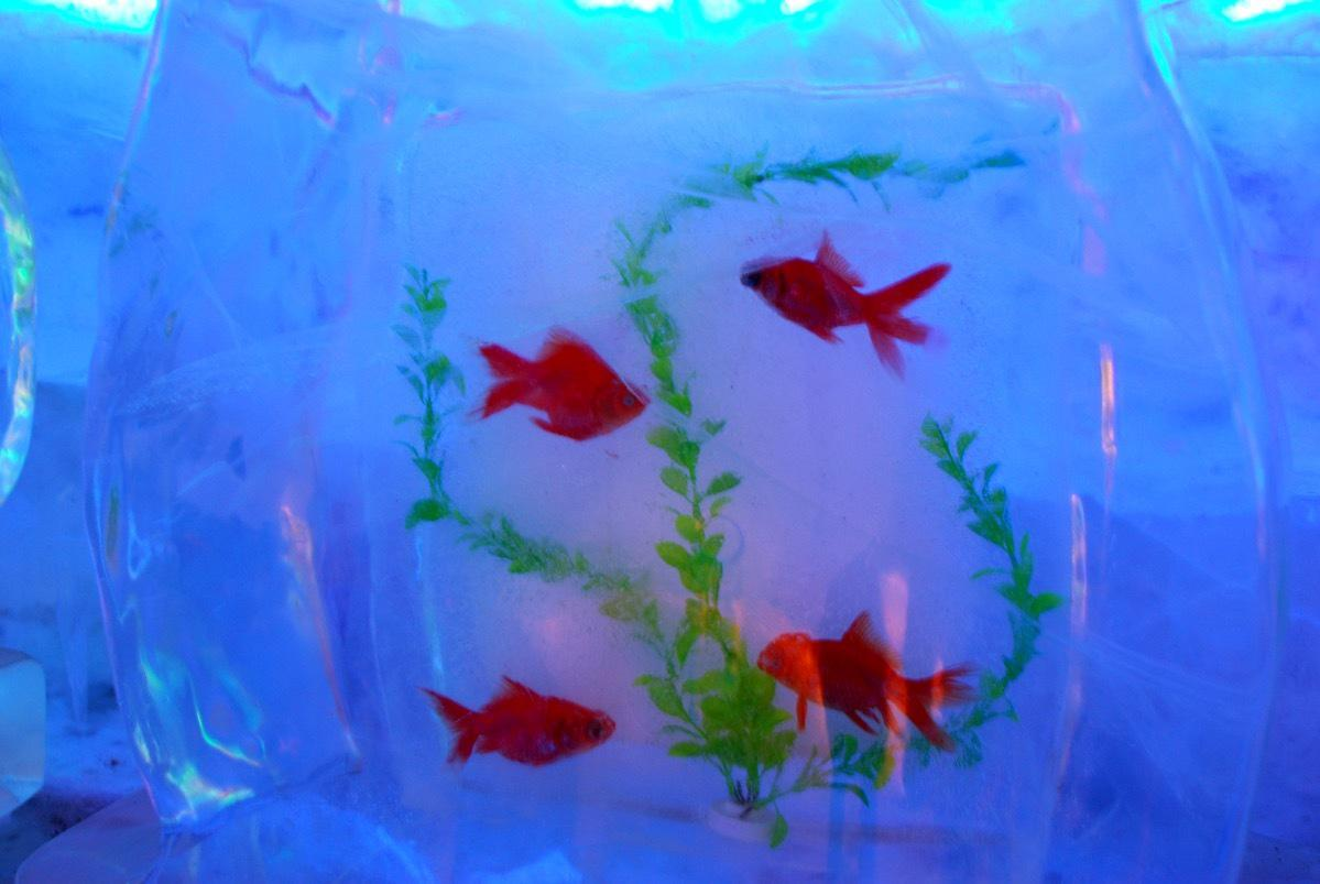 Discover Beijing - Ice Festival 11