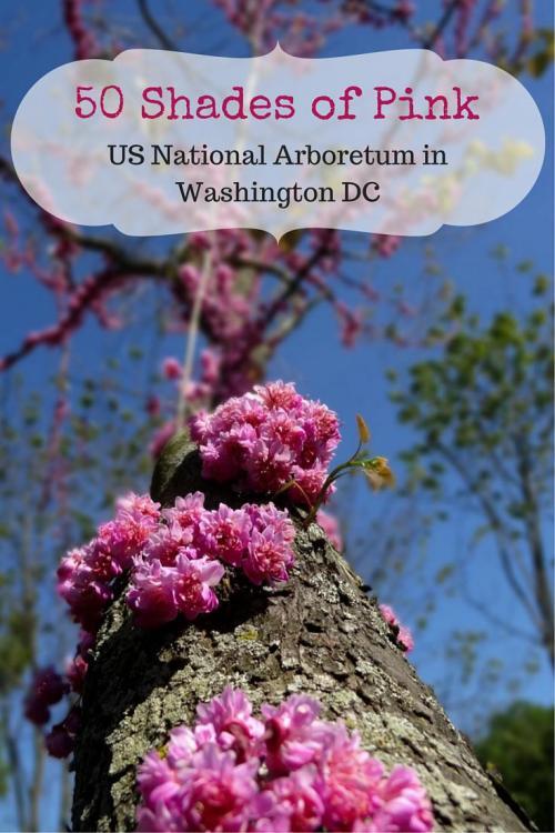 US National Arboretum in Washington DC - 50 Shades of Pink Photo Essay