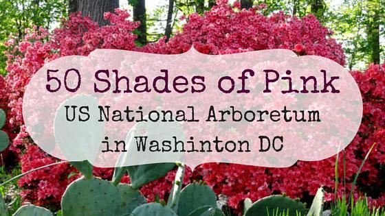 50 Shades of Pink – Azalea Bloom at the Arboretum in Washington DC