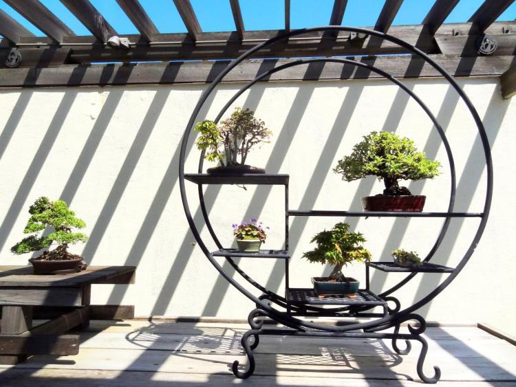 Arboretum Washington DC Bonsai Exhibition