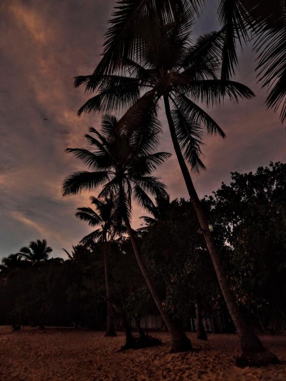 Palm Trees at Dusk - Sosua Beach Dominican Republic