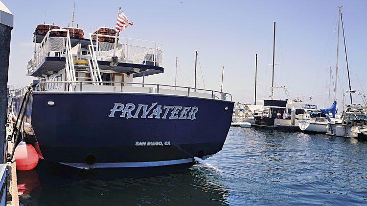 Whale Watching San Diego - Pioneer