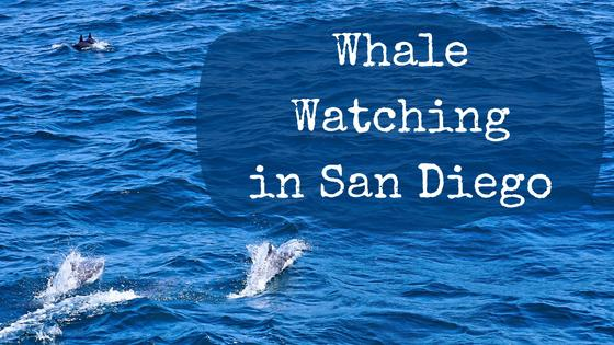 Whale Watching in San Diego
