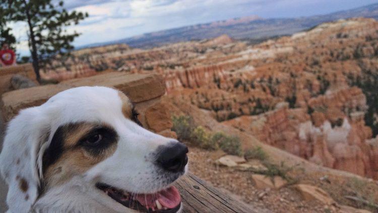 Robby at Bryce Canyon: Utah National Parks