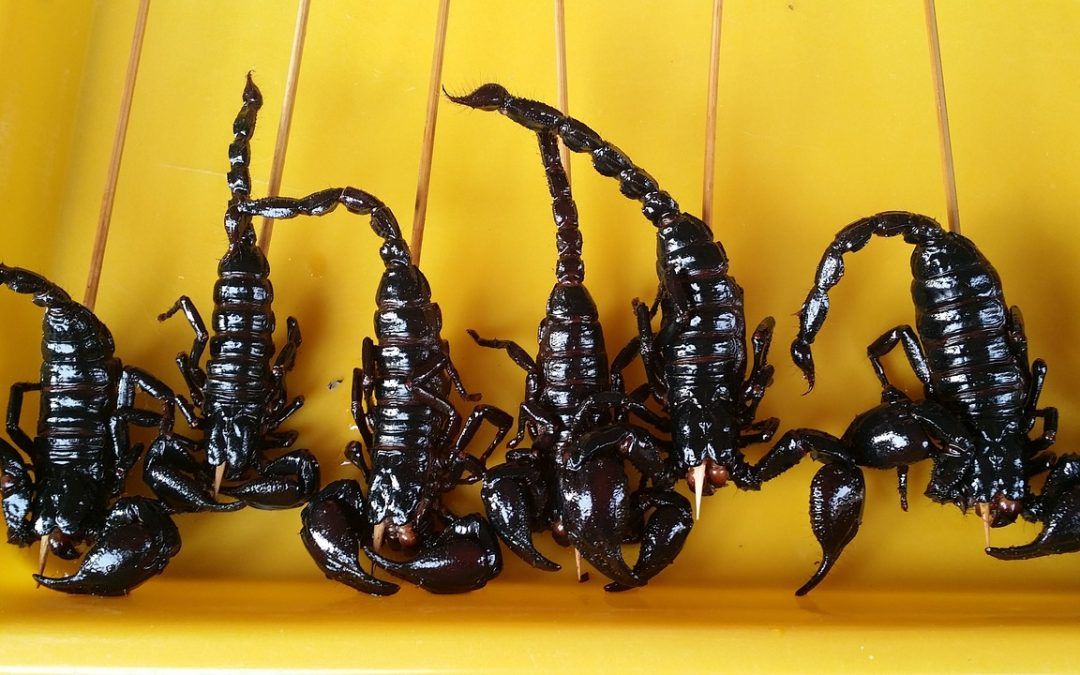 Edible Insects – A Push Outside Your Comfort Zone